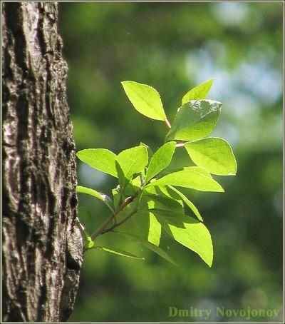 Новая жизнь : Природа мудрее нас, мы отнимаем жизнь, природа дарит ее (Фотограф Дмитрий Новоженов)
