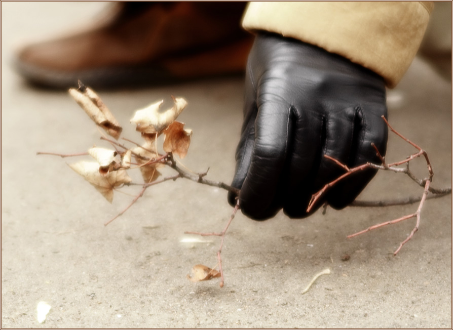 Дары осени : Тонкая ветка - все, что осталось от буйства красок осени (Фотограф Дмитрий Новоженов)