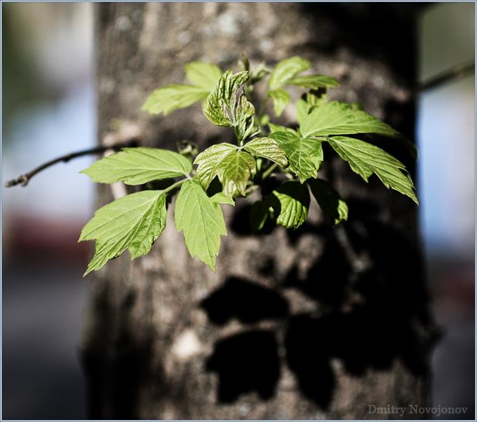 Желание жить : Природа не бросает попыток выжить даже когда понятно, что не удастся. (Фотограф Дмитрий Новоженов)