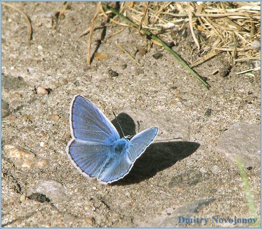 Бабочка : Что делает ночная бабочка посреди дня, среди людей? (Фотограф Дмитрий Новоженов)