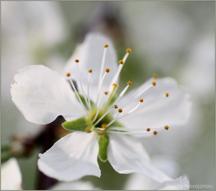 Гарем : Каждый цветок - маленький мир. Как и каждая семья, наверно. (Фотограф Дмитрий Новоженов)