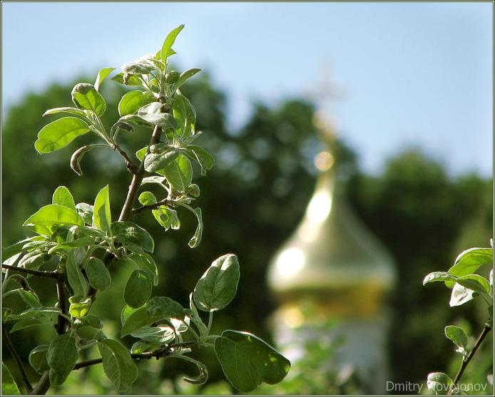 Соседи : Они прекрасно уживаются рядом, церковь, которой сотни лет и молодая листва, которой несколько недель. (Фотограф Дмитрий Новоженов)