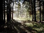 """Фотография """"Из тени в свет"""" (Фотограф Дмитрий Новоженов)"""