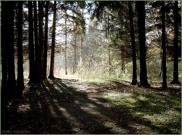 Из тени в свет : Когда глаза привыкают к тени, свет слепит. Но впереди - свет. (Фотограф Дмитрий Новоженов)