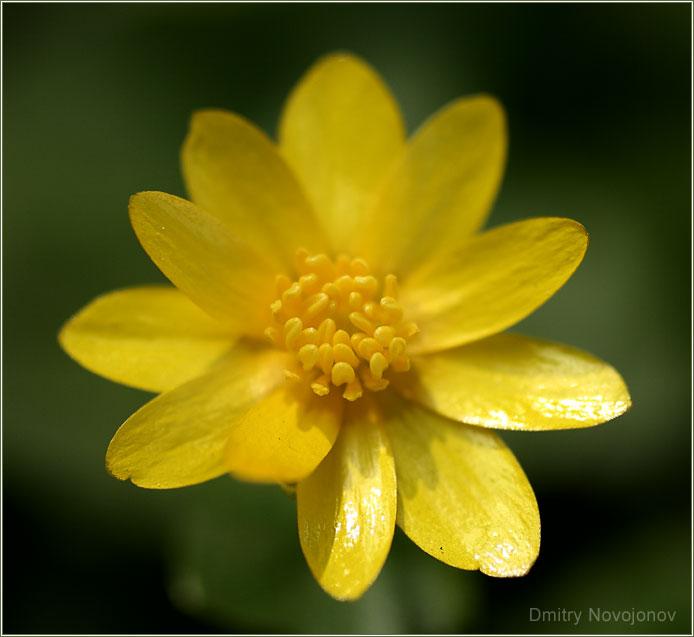 Охренелик : Я не знаю, как его зовут, этот цветок, но каждую весну встречаюсь с ним на ВДНХ. Не скажу за него, но я каждый год жду встречи. (Фотограф Дмитрий Новоженов)
