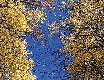 """Фотография """"Золото на голубом"""" (Фотограф Дмитрий Новоженов)"""